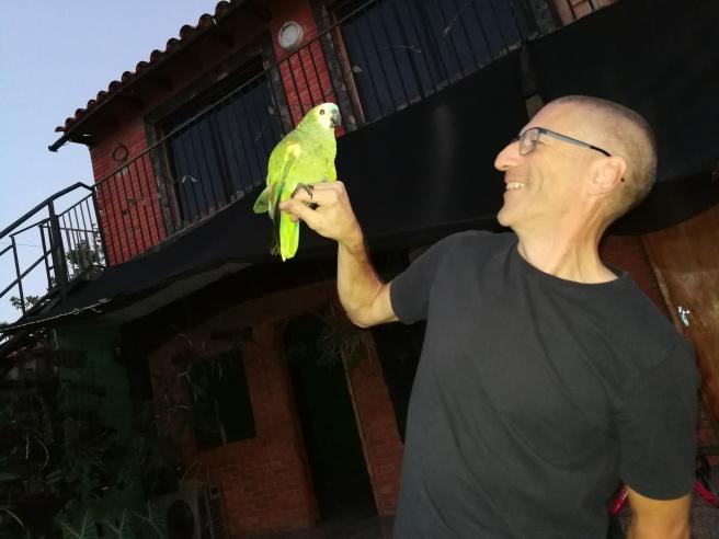 Welches ist der Papagei
